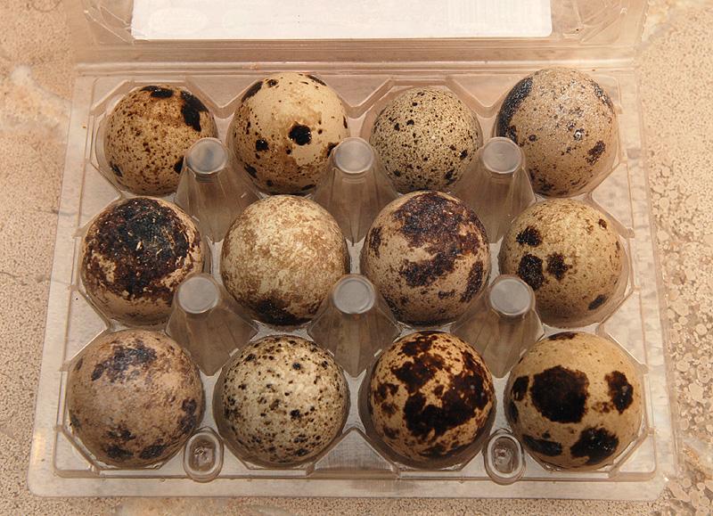 Presentación de huevos de codorniz