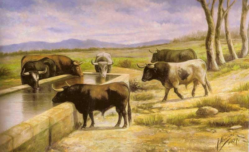 Toros en el campo, por J. Alcaraz