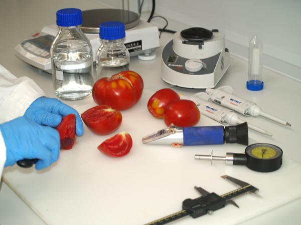 Pruebas de tomates en laboratorio.