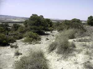 El Arabilejo Integra.servlets.Imagenes?METHOD=VERIMAGEN_35468&nombre=13_res_300