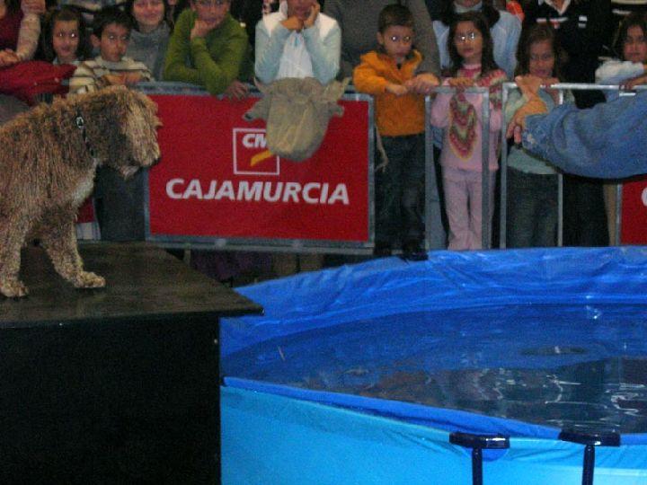 Exposici n canina regi n de murcia digital for Tirarse a la piscina
