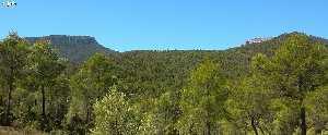 Bosque maduro de pino carrasco (Pinus halepensis), Sierra Espuña