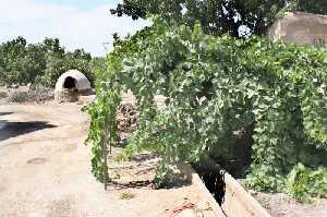 Huerta tradicional de Puerto Lumbreras