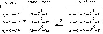 Estructura triglicéridos