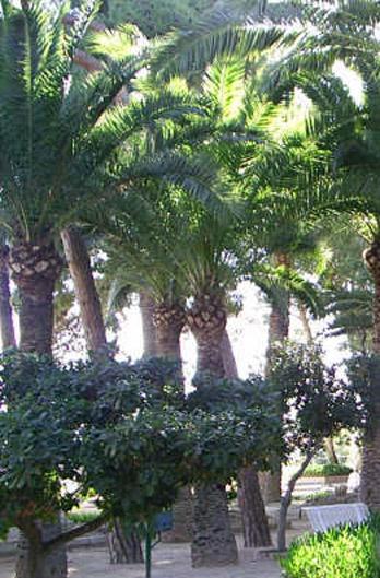 Naturaleza de los ba os de fortuna flora y fauna regi n - Oasis bano turco sl ...