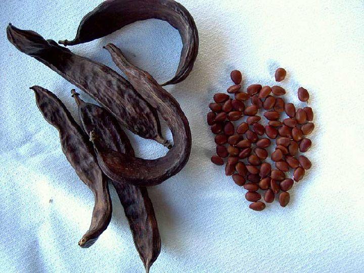 Harina de algarroba y garrofín - Alimentación y Nutrición