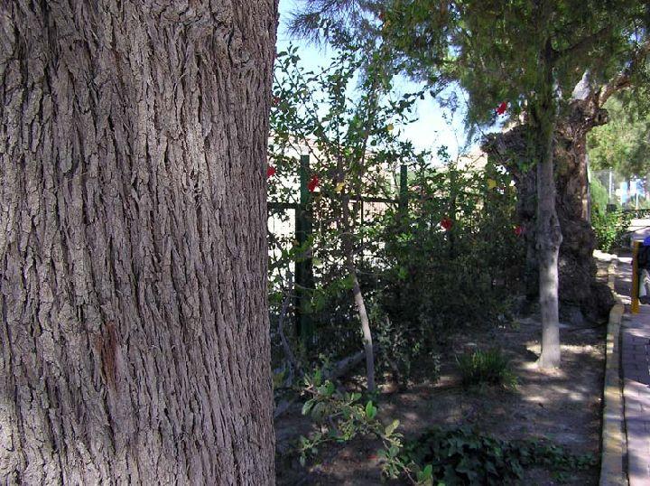 Nuestra se ora asunci n lbum de fotos regi n de for Jardin infantil los pinos