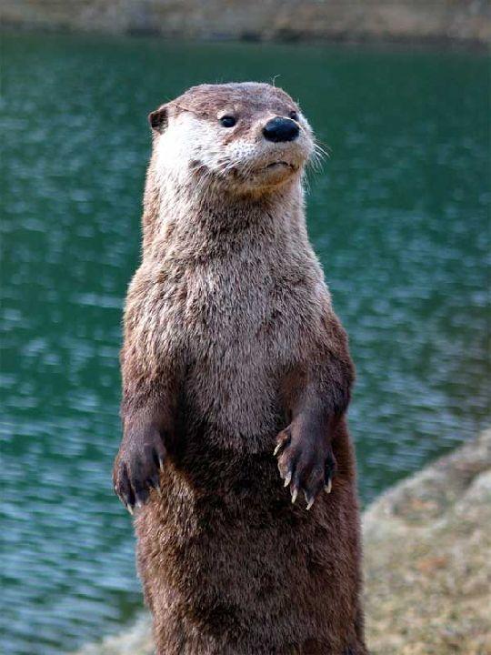 River Otter Damage Management