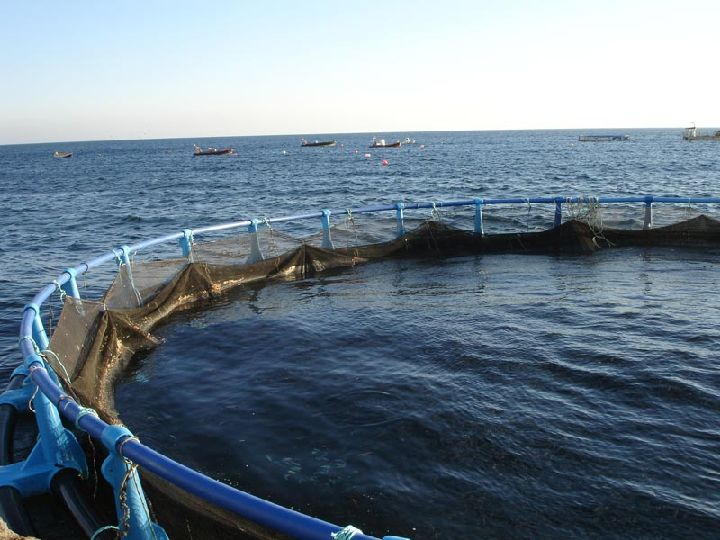 Sector pesquero acuicultura regi n de murcia digital for Jaulas flotantes para piscicultura