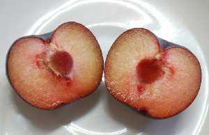 Ciruela variedades y nutrici n regi n de murcia digital for Ciruela santa rosa